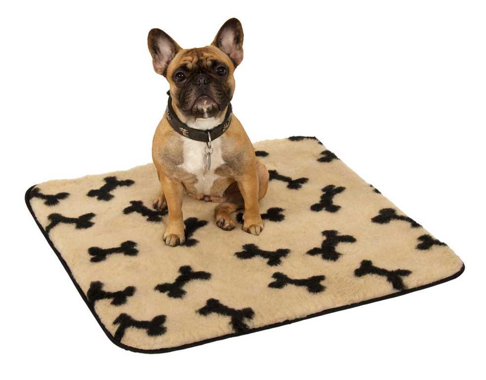 Doga: Yoga mit dem Hund - alles was Du wissen musst