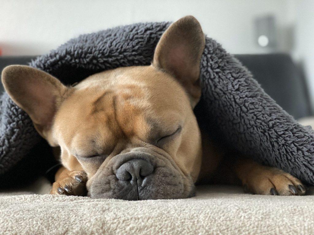 Erholsames Schlafen – mit Yoga und der richtigen Matratze